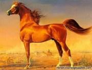 Chestnut_arabian_horse