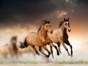 خلفيات-فرس-عربي-اصيل-وصور-احصنة-جميلة-4
